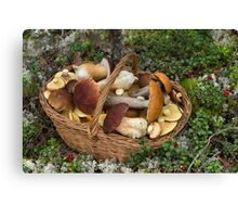 Mushrooms in the Wicker Basket on the Green Grass and Moss Canvas Print