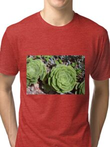 Spherical succulents in the garden Tri-blend T-Shirt