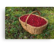 Fresh Cowberries in a Basket in the Forest Canvas Print