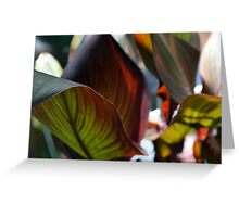 Beautiful natural background with large leaves Greeting Card