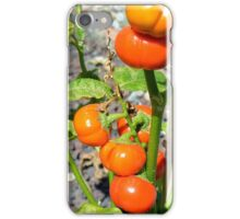 Tomatoes growing in the garden iPhone Case/Skin