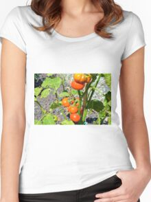 Tomatoes growing in the garden Women's Fitted Scoop T-Shirt