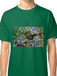 Beautiful succulents in the garden Classic T-Shirt