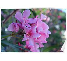 Purple delicate flowers Poster
