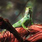 Fiji Banded Iguana by SRowe Art