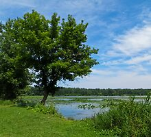 East Harbor State Park - Scenic Overlook 2 by SRowe Art