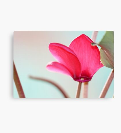 Cyclamen Crown Canvas Print
