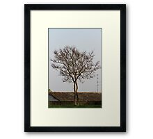 trees in spring Framed Print