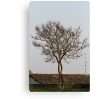 trees in spring Canvas Print