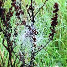 Cobweb in the rain by John Dalkin