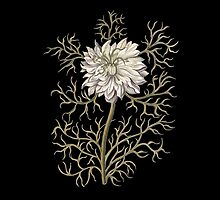 Nigella Damascena Medieval Botanical by AntiqueImages