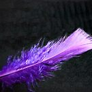 Purple Feather came floating by by EdsMum