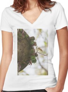 succulent plant Women's Fitted V-Neck T-Shirt