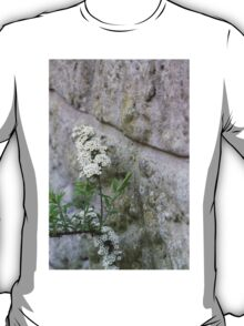 flower in the wall T-Shirt