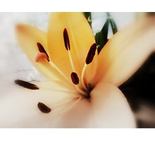 Tiger Lily Photographic Print