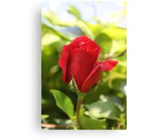 Beautiful Red Rose Bud Canvas Print