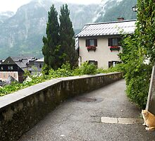 Cats of Hallstatt by mike2048