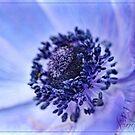 Inner Beauty  by SandraRos