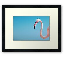 pink flamingo on the blue isolated background texture Framed Print