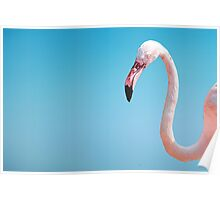 pink flamingo on the blue isolated background texture Poster