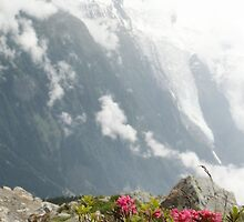 Pink Flowers on the Tour de Mont Blanc by AdelaideStreet