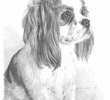 cavalier king charles spaniel drawing by Mike Theuer