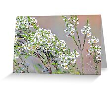 An Australian Native Beauty - Geraldton Wax Greeting Card