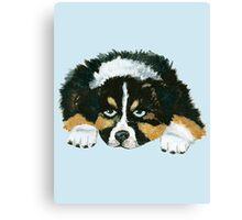 Black Tri Australian Shepherd Puppy  Canvas Print