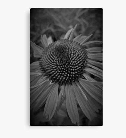 Echinacea - Monochrome Canvas Print