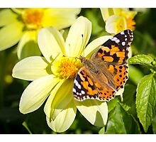 Butterfly. Photographic Print