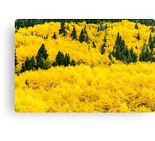 Buried In Gold Canvas Print