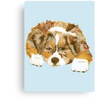 Red Merle Australian Shepherd Puppy Canvas Print
