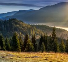 spruce forest in foggy Romanian mountains Sticker