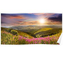 wild flowers on the mountain top at sunset Poster