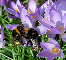 Busy Bumble Bees by Vanessa  Warren