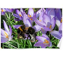 Busy Bumble Bees Poster