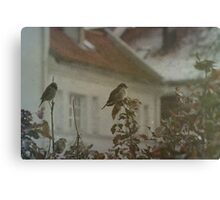 Stubborn Sparrows Canvas Print