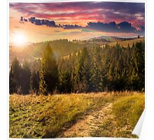 coniferous forest on a  mountain top at sunset Poster