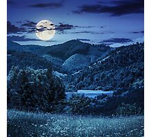 pine trees near meadow in mountains at night Photographic Print