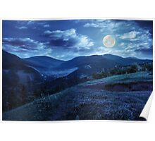flowers on hillside meadow in mountain at night Poster