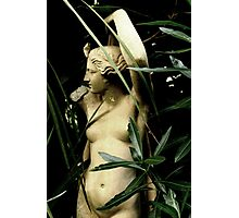 In The Garden of Eden Photographic Print