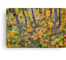 Forest Colors Canvas Print