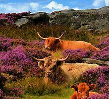 3 highland cows by waylander99uk