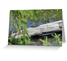 Painted Turtle in Algonquin Park Greeting Card