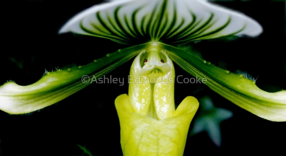 Dream a Little Dream - Orchid Alien Discovery by ©Ashley Edmonds Cooke