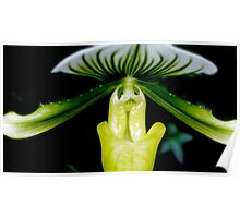 Dream a Little Dream - Orchid Alien Discovery Poster