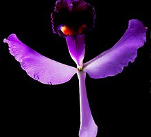 Evil Eye - Orchid Alien Discovery by ©Ashley Edmonds Cooke