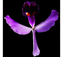 Evil Eye - Orchid Alien Discovery Photographic Print