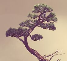 The Bonsai by mallorybottesch