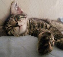 Mikino enjoying an afternoon snooze by Jaeda DeWalt